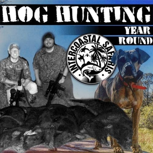 Images of Hog Hunting trips