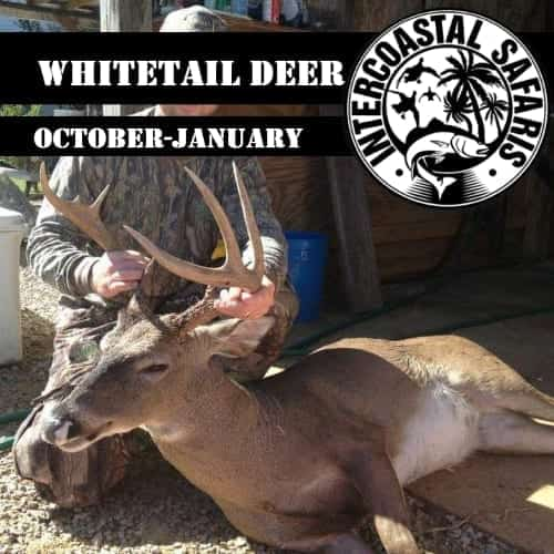 Alabama Blackbelt Whitetail
